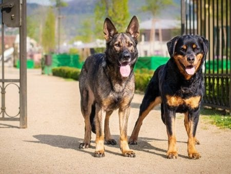 Why Are Dogs Great For Security?